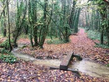 Over The Bridge, Thurlbear Woods