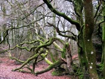 Lydeard Hill Jog 5 Spr 19