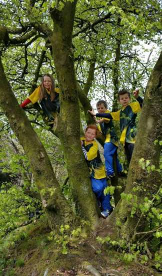 Tree dwellers at Staple Hill