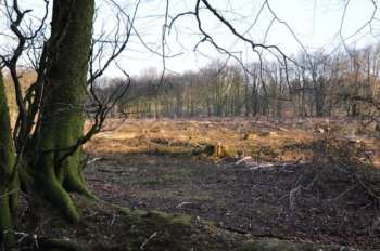 Cleared area, Blackborough Common