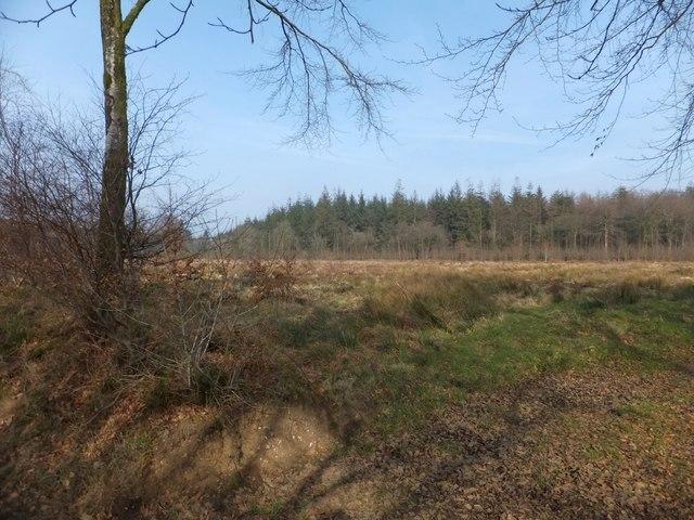 Cleared area, Downslands Plantation