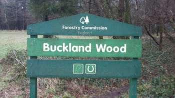 Buckland Wood