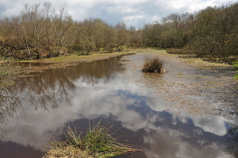 Pond on Blackdown Common, Culm Davy
