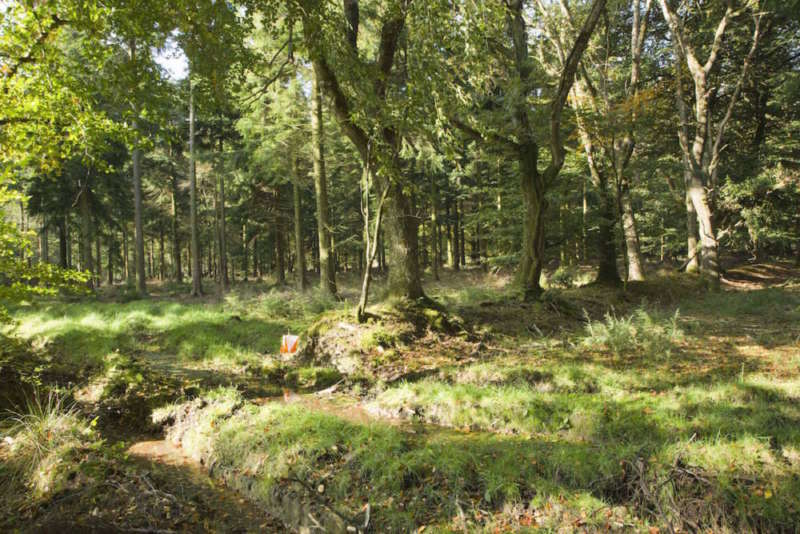 Nice woodland
