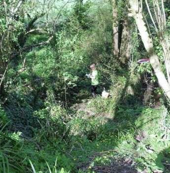 Jungle-like area, Henlade Woods
