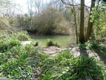 Pond, Henlade Hill