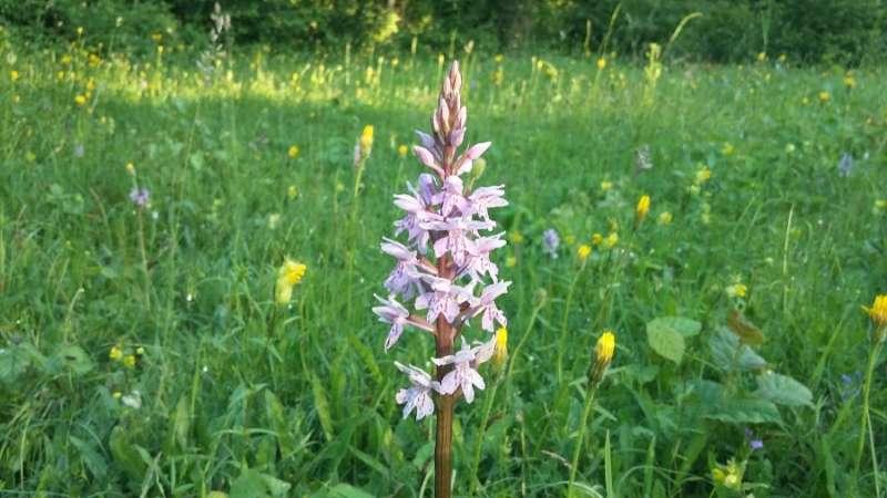 Meadow at Thurlbear