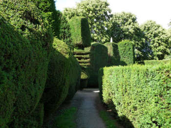 Topiary at Montacute