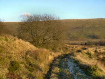 Horcombe Moor