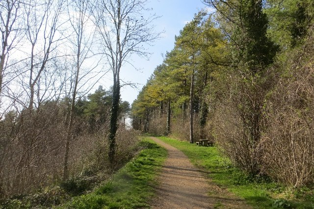 path towards open area, Combe Hill