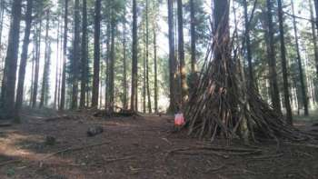 Ashclyst Forest