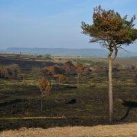 The almost Serengeti-like plains of Woodbury Common