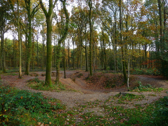 A depression in Savernake Forest, Wiltshire