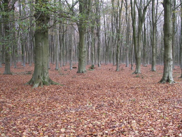 West Woods, Wiltshire