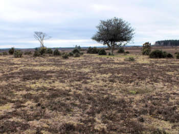 Turf Hill, New Forest
