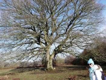 Ash Priors - Amazing tree