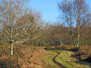 Path, to W of Broomfield Hill