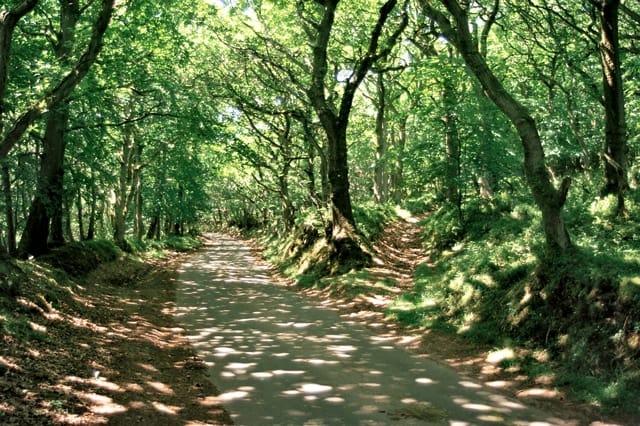 Road E of Dead Woman's Ditch