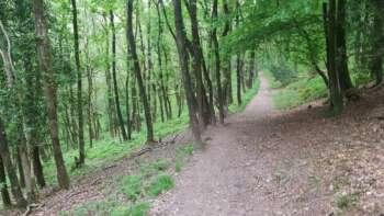 Descending Path