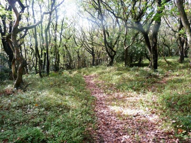 Path near Ashley Combe