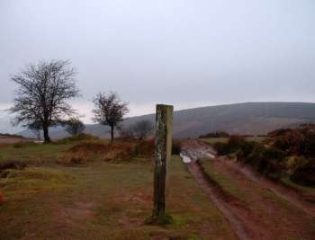 Bicknoller Post, St Audries, looking W