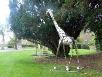 Queens- giraffe