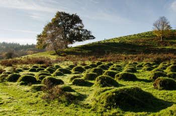 Croydon Hill Deer Park - anthills