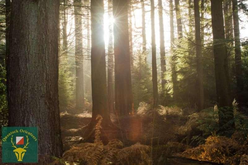 Dunster Forest