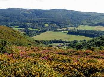Great Headon plantation, as seen from Little Headon plantation