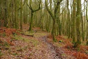 Granny's Path, Horner Woods