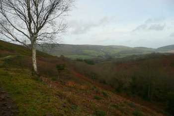 Above Halse Common (N of area), towards Selworthy