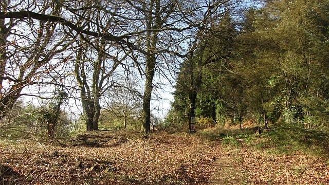 Willett Hill plantation