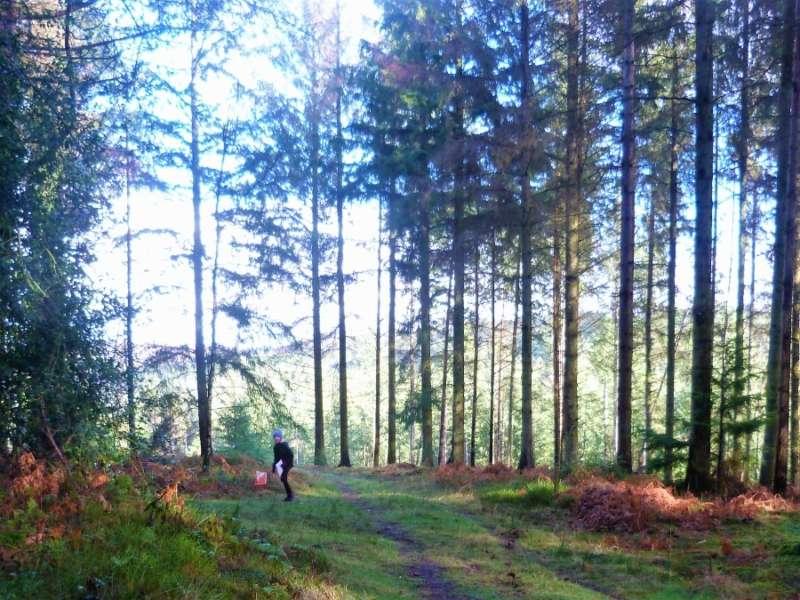 Sunlit forest, Croydon Hill on Sunday