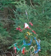 A Christmas tree, in situ