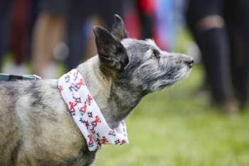 Dog spectator