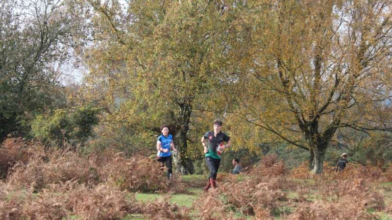 Action from Burley Wood, 2015