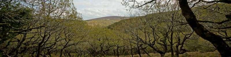 2013: Horner Woods & Dunkery Hill