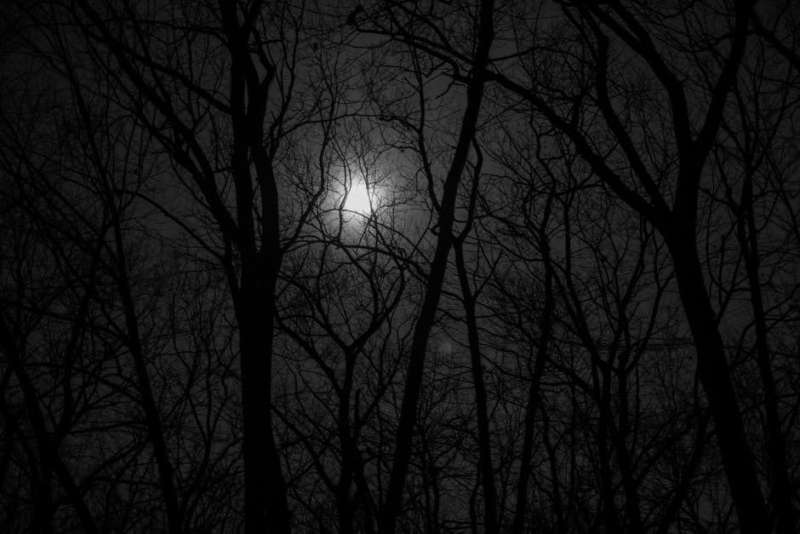 A full moon seen from the woods